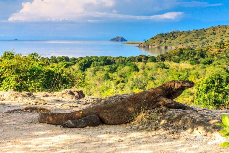 Komodo Exotic Island – 3 Days-03