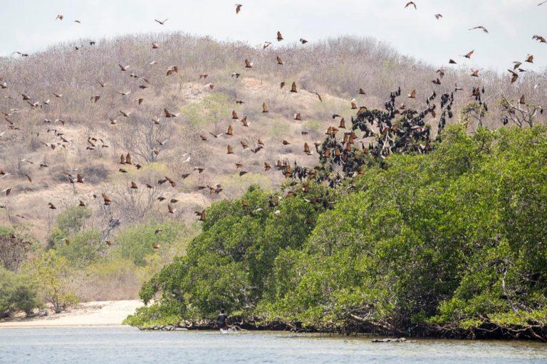 Komodo Exotic Island – 3 Days-05