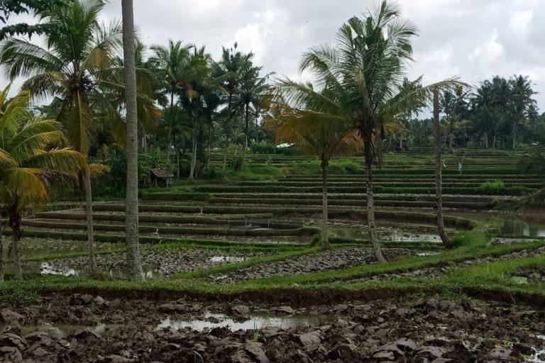 Tampak Siring Village & Gunung Kawi Trek – 3 Hours-01