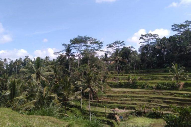 Tampak Siring Village & Gunung Kawi Trek – 3 Hours-05