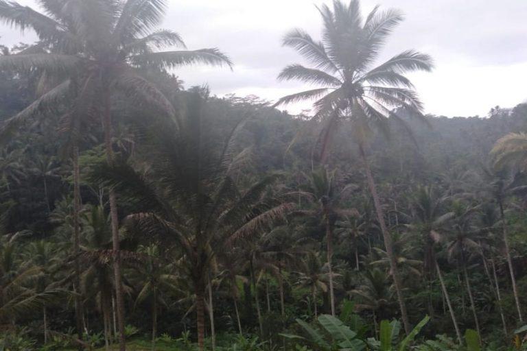 Tampak Siring Village & Gunung Kawi Trek – 3 Hours-07