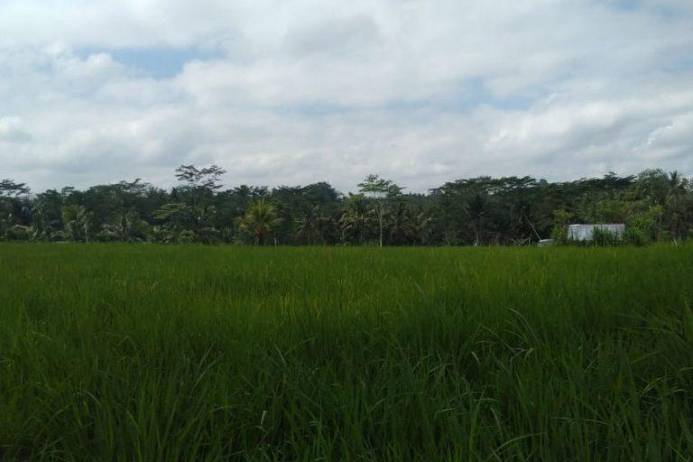 Tampak Siring Village & Gunung Kawi Trek – 3 Hours-09