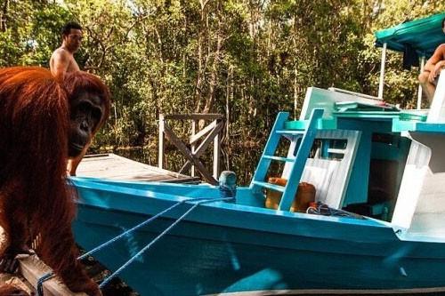 Borneo Orangutan Tour Klotok – 4 Days-01