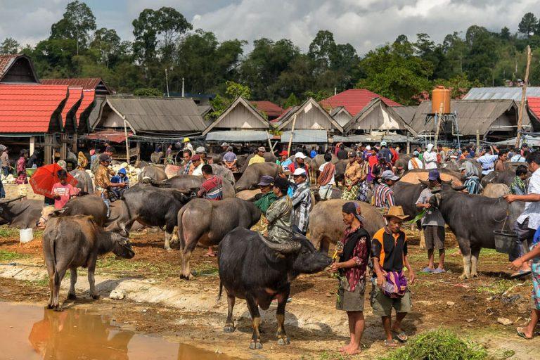 Discover Toraja Highland and Mamasa – 7 Days-02