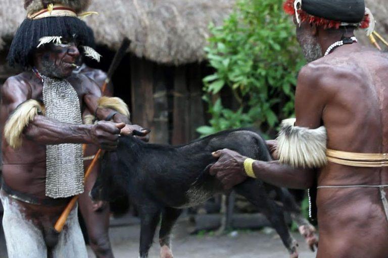 Explore Papua Korowai Wamena – 10 Days-03
