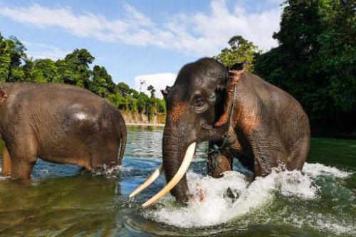 Incredible Sumatra Adventure – 7 Days-02