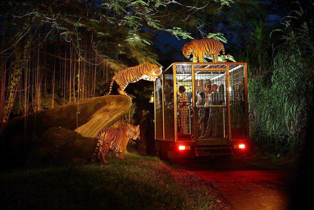 Lion Night Safari