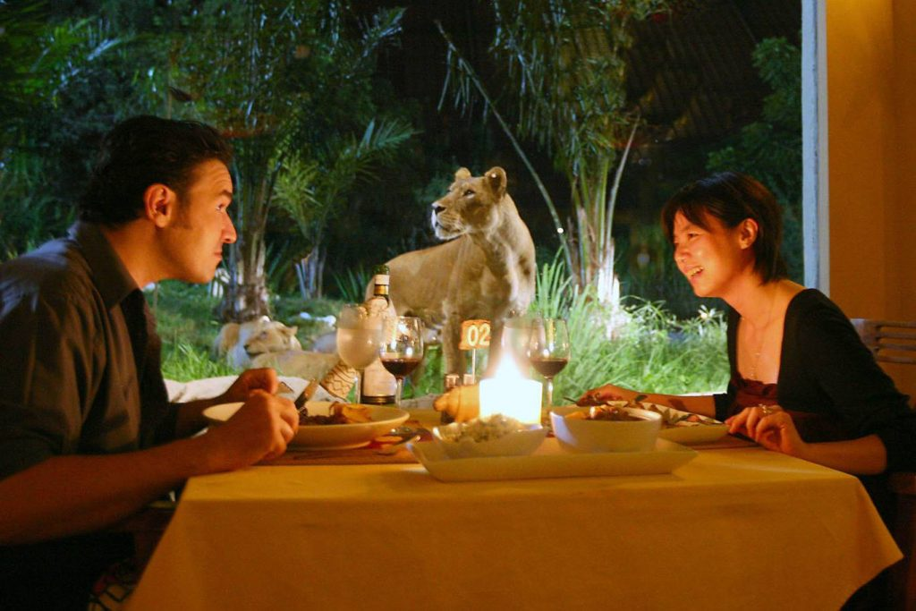 Lion Night Safari.jpg2