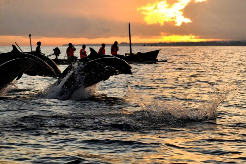 North Bali Sunrise Tour Dolphin