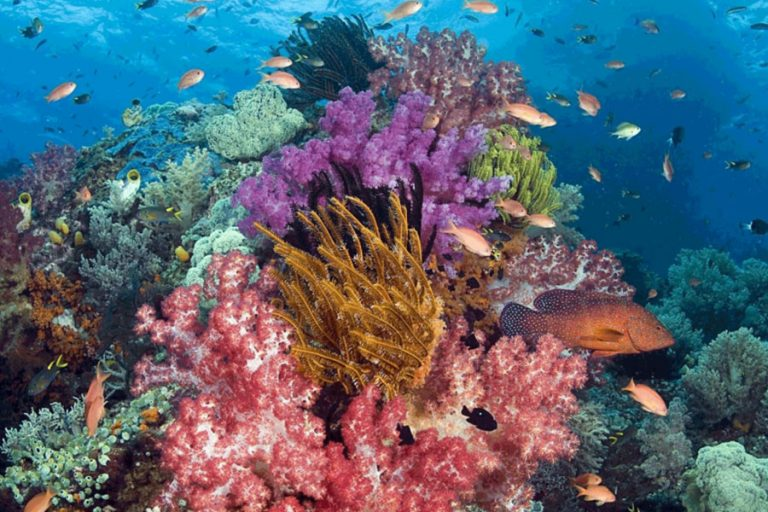 Raja Ampat Islands Leisure Expedition – 10 Days-01