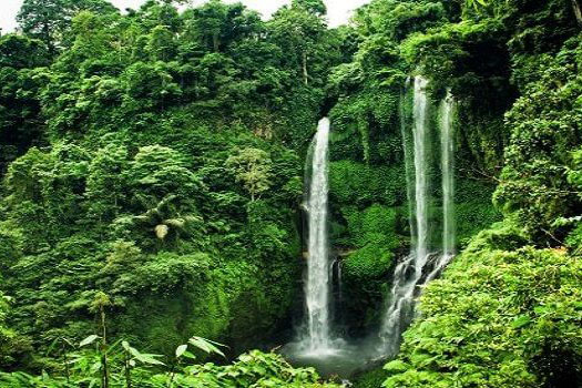 Sekumpul Waterfall Trekking-02