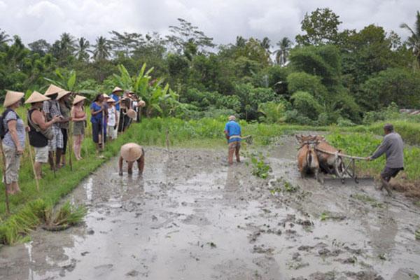Simple Balinese Life