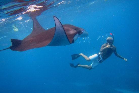 Snorkeling Nusa Penida 2