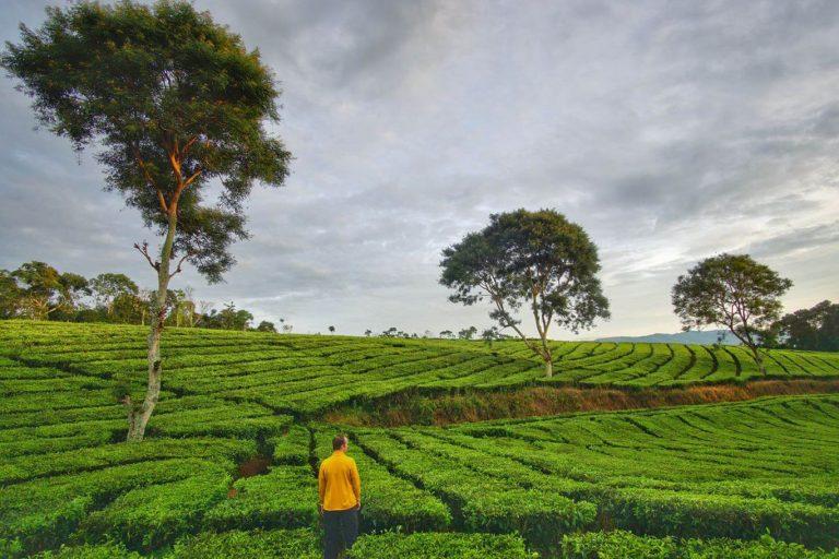 South Sumatra Bengkulu Lampung Overland – 13 Days-05