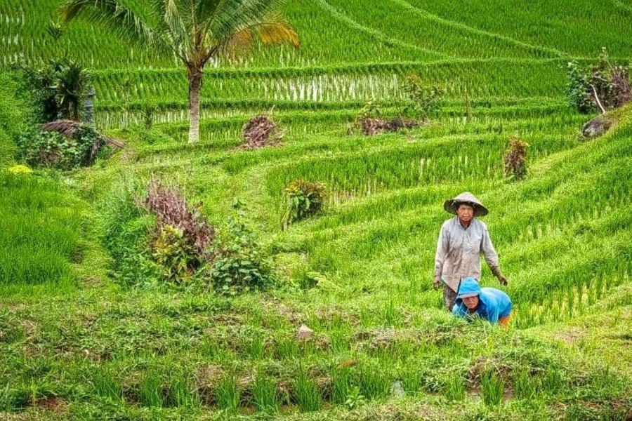 Tampak Siring Village & Gunung Kawi Trek – 3 Hours-12