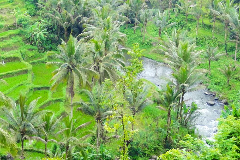 Ayung River Rafting Ubud-03