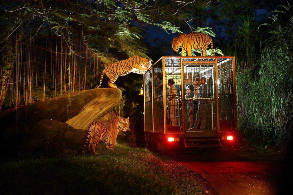Night Safari Tour with Dinner-01