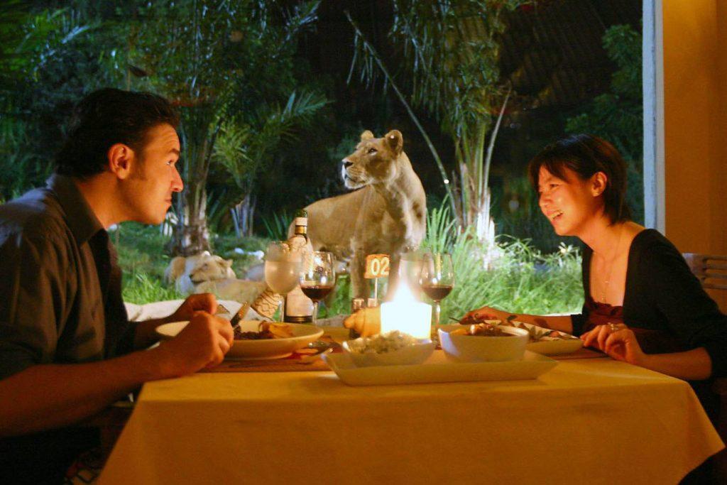 Night Safari Tour with Dinner-03